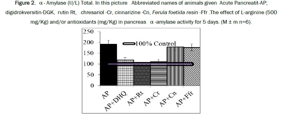 biology-pancreas