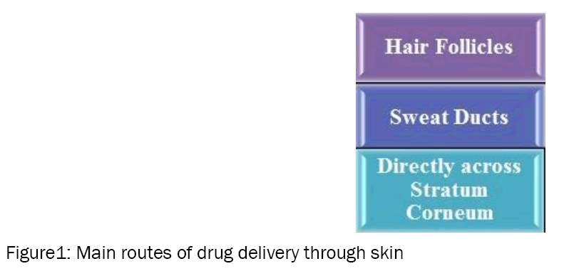 Biology-Main-routes-drug-delivery-through-skin