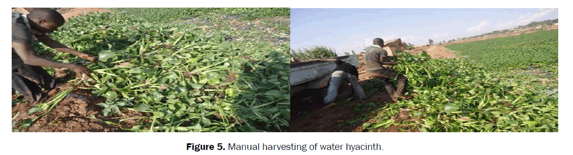 agriculture-allied-sciences-Manual-harvesting
