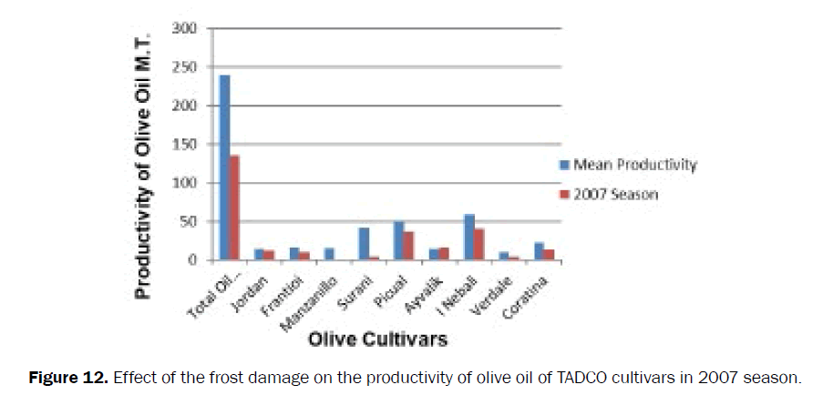 agriculture-allied-sciences-productivity-olive