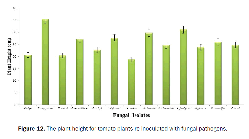 agriculture-and-allied-sciences-fungal-pathogens