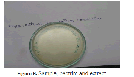 biology-extract-bactrim