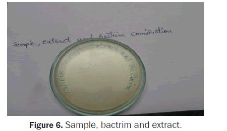 biology-extract-bactrim