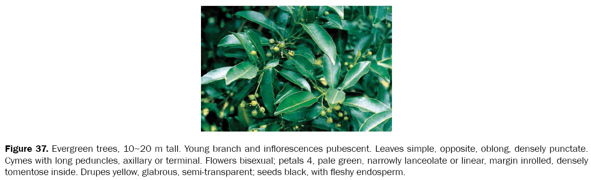 botanical-sciences-Evergreen-trees