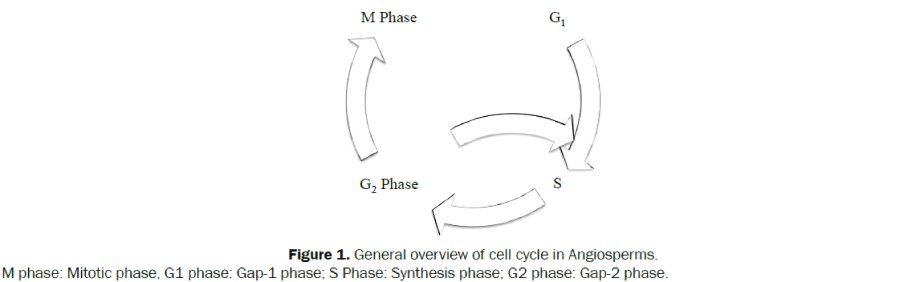 General-overview-Angiosperms