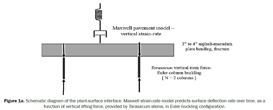 botanical-sciences-Schematic-diagram-plant-surface