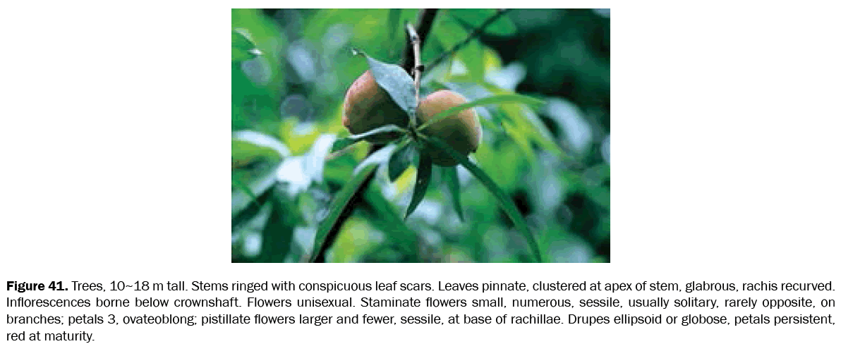 botanical-sciences-conspicuous-leaf