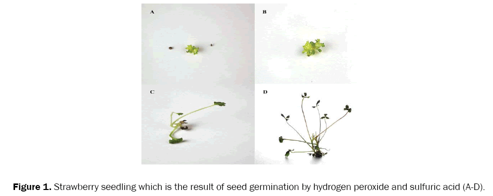 botanical-sciences-seed-germination