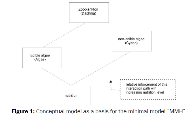 environmental-sciences-Conceptual-model-as-basis