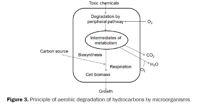 environmental-sciences-Principle-aerobic-degradation-hydrocarbons