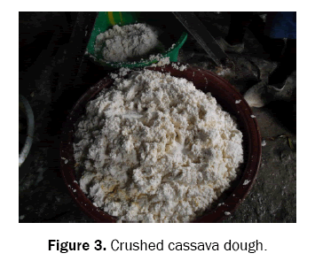 food-and-dairy-technology-cassava