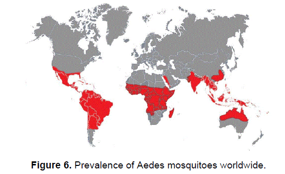 health-sciences-mosquitoes-worldwide