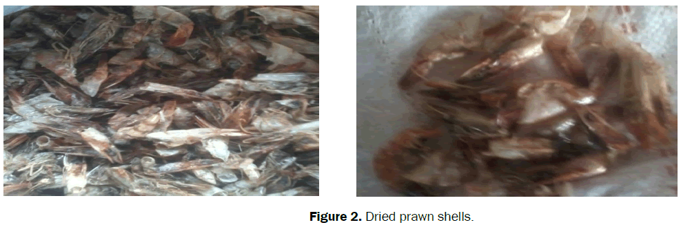 material-sciences-dried-prawn-shells