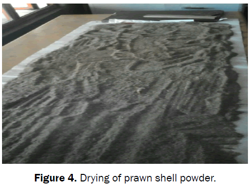 material-sciences-drying-prawn-shell-powder
