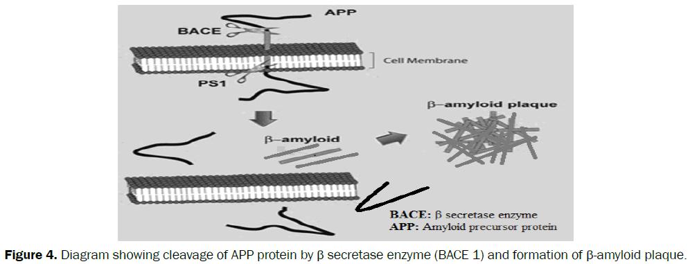 medicinal-organic-chemistry-APP-protein