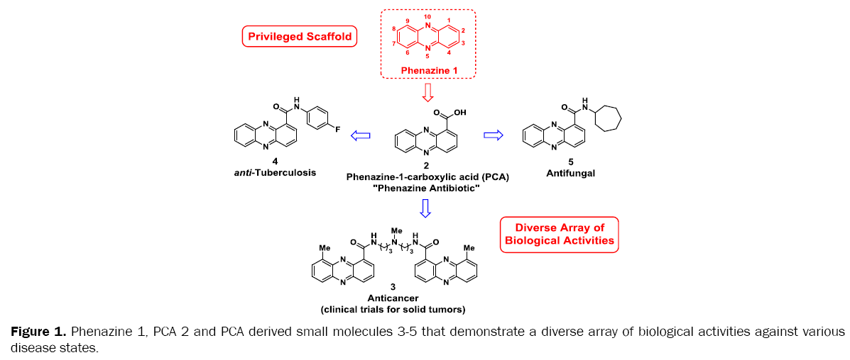 medicinal-organic-chemistry-PCA-derived-small-molecules