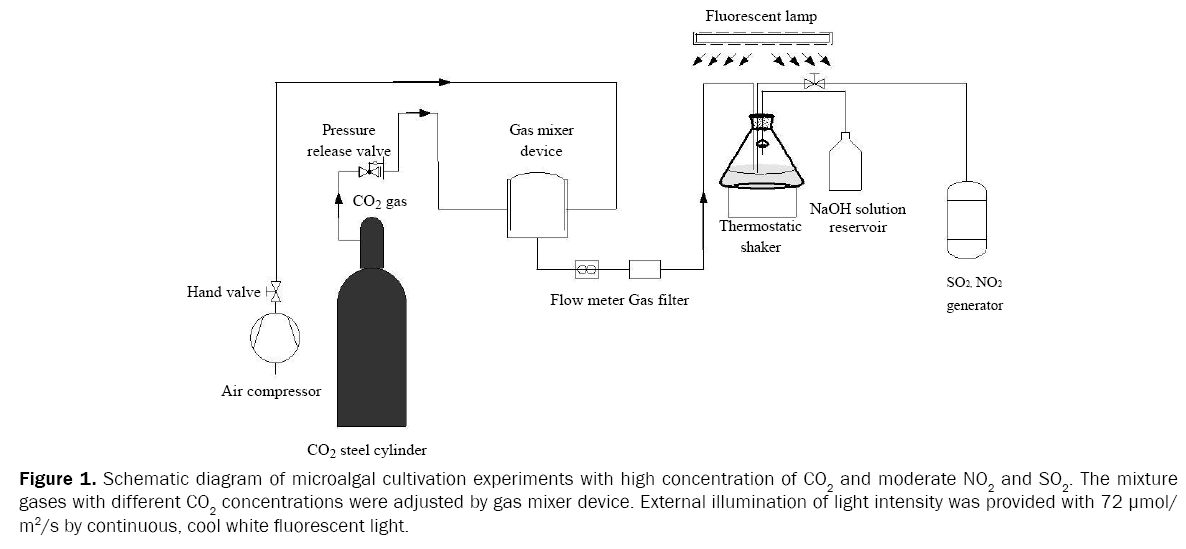 microbiology-and-biotechnology-Schemati-c-diagram-microalgal-cultivation