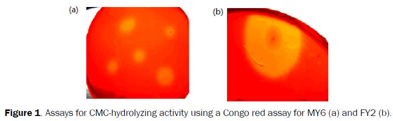 microbiology-biotechnology-CMC-hydrolyzing-Congo