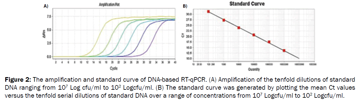 microbiology-biotechnology-DNA-based-RT-qPCR