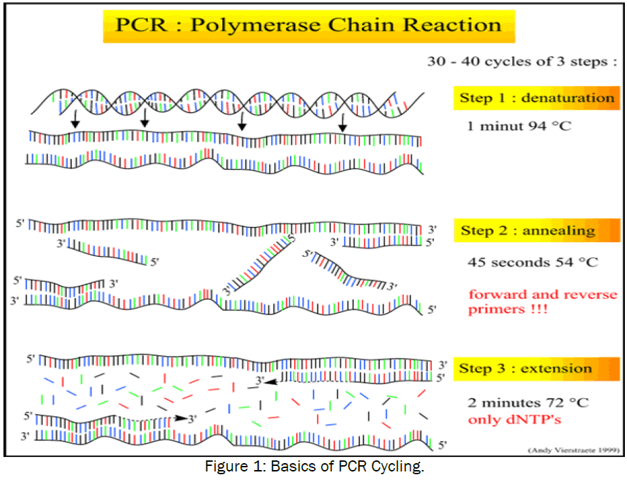 3 Applications Of Pcr