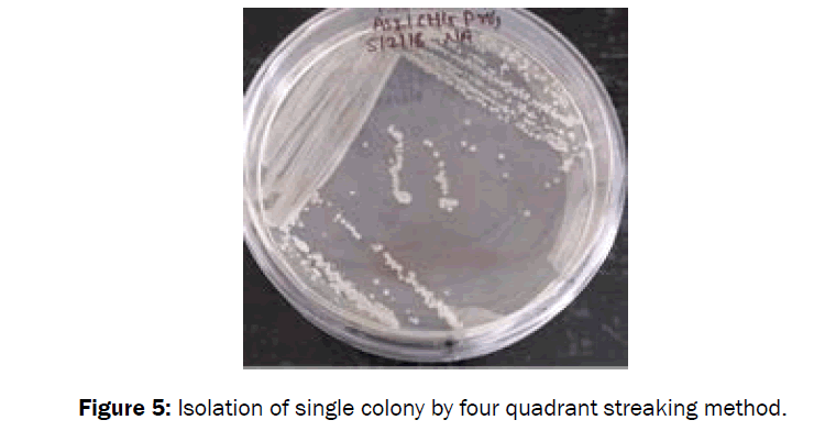 microbiology-biotechnology-colony