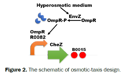microbiology-biotechnology-osmotic-taxis-design