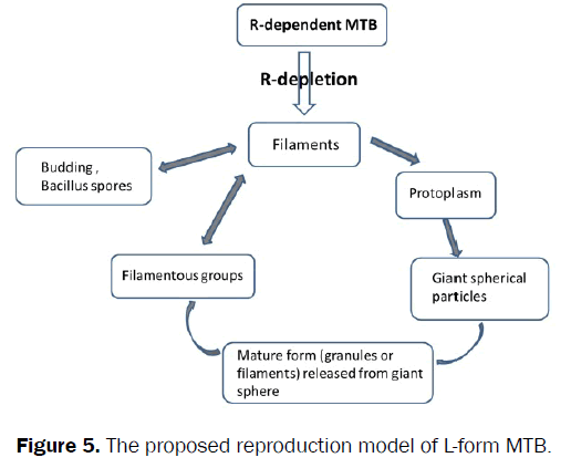 microbiology-biotechnology-proposed-reproduction-model