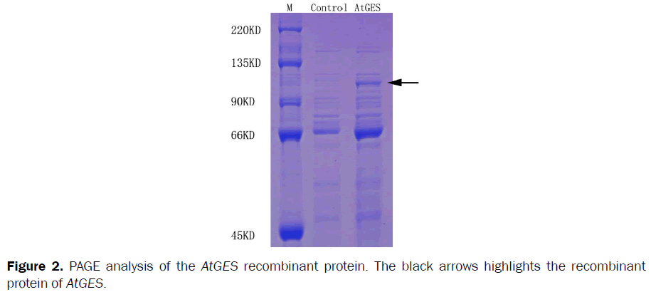 microbiology-biotechnology-PCR-product-ORF