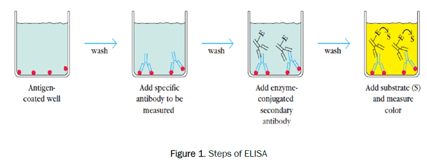 pharmaceutical-analysis-Steps-ELISA