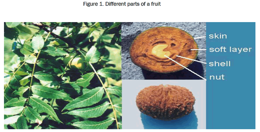 pharmaceutical-sciences-Different-parts-fruit