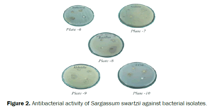 pharmacognosy-phytochemistry-Antibacterial-activity-Sargassum