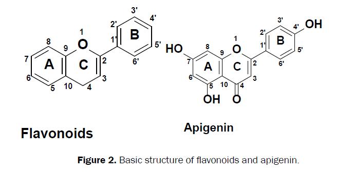pharmacognosy-phytochemistry-Basic-structure