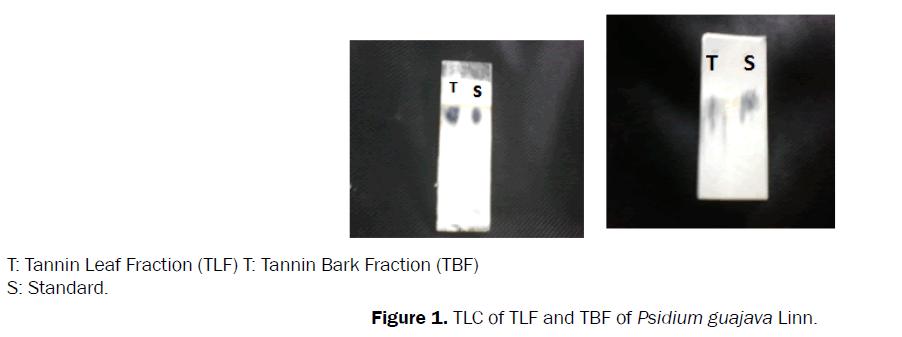 pharmacognosy-phytochemistry-TLC-TLF-TBF