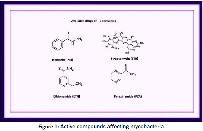 pharmacology-toxicological-studies-affecting-mycobacteria