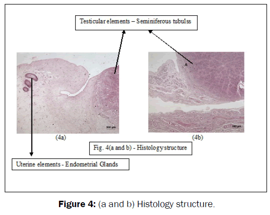 veterinary-sciences-Histology-structure