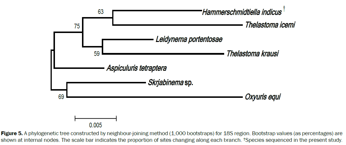 zoological-sciences-scale-bar-indicates-proportion